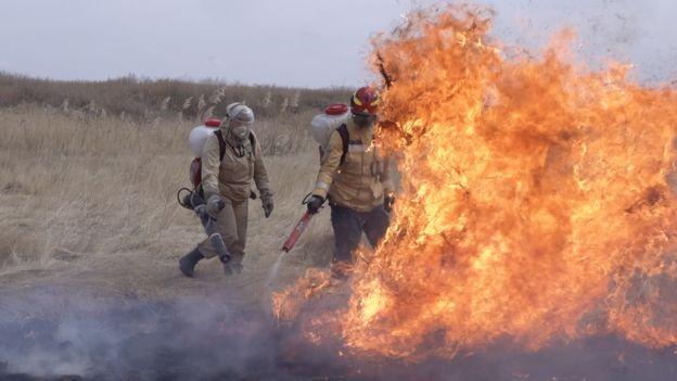 Огонь в степи
