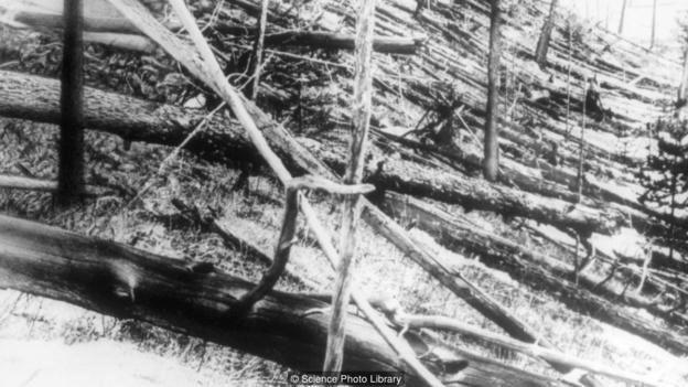 Tunguska'da göktaşı çarpmasından etkilenen ağaçlar