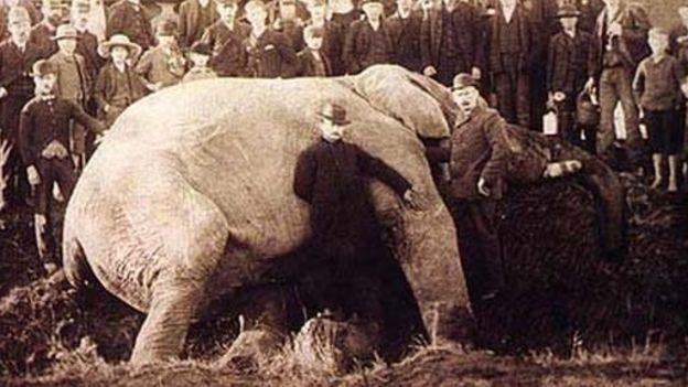 Jumbo yace en el suelo tras su muerte junto a su cuidador Walther Scott Foto: Wiki Commons