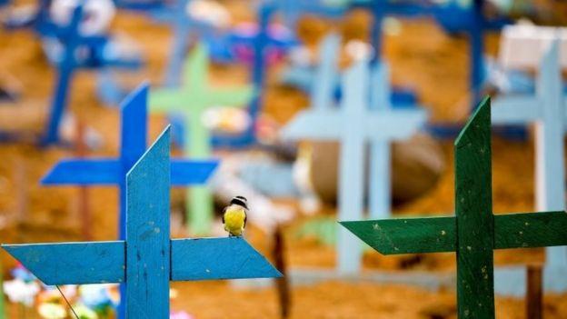Pássaro sobre cruzes em cemitério