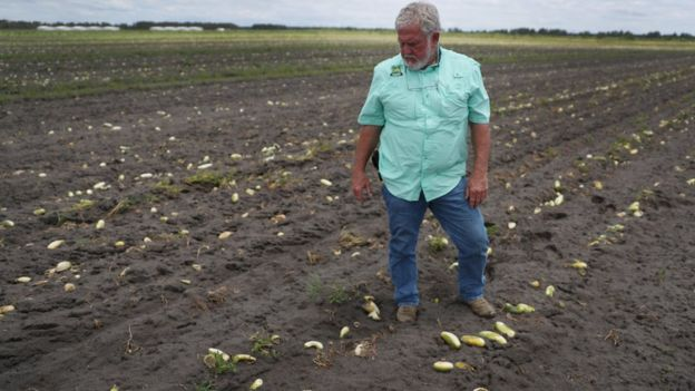 Фермер Хэнк Скотт из Флориды в поле гниющих огурцов