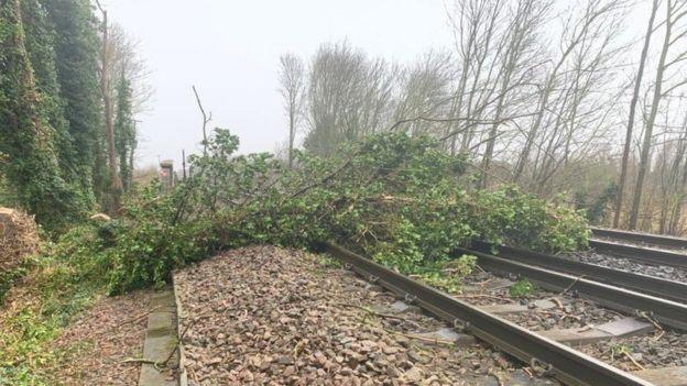 A tree on a line near Sittinbourne