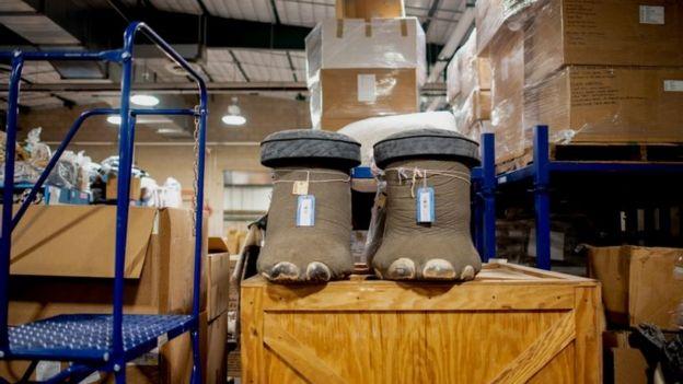 Patas de elefante e outros itens de caça ilegal de animais silvestres nos EUA