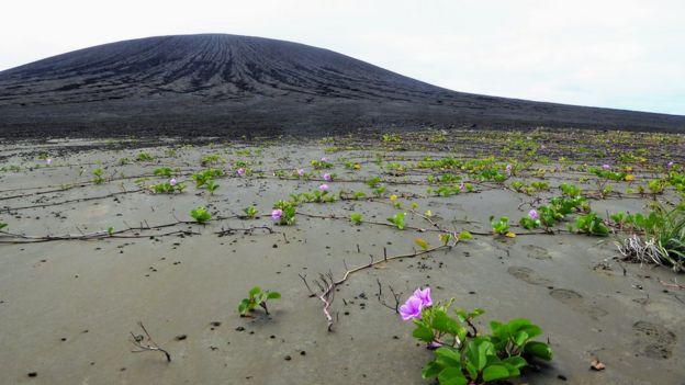 Plantas con flores en el lodo