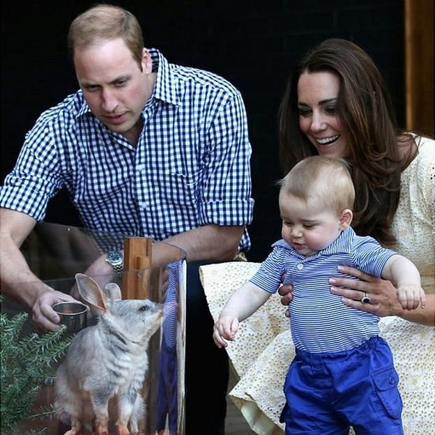 شاهزاده ویلیام، کیت میدلتون و شاهزاده جرج به یک بیلبی نگاه میکنند (دیدار از باغ وحش سیدنی ۲۰۱۴)