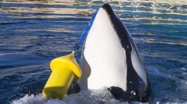 نهنگی که سلام میکند