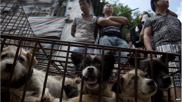 """Vendors wait for customers to buy dogs in cages at a market in Yulin, in southern China""""s Guangxi province on June 21, 2015."""