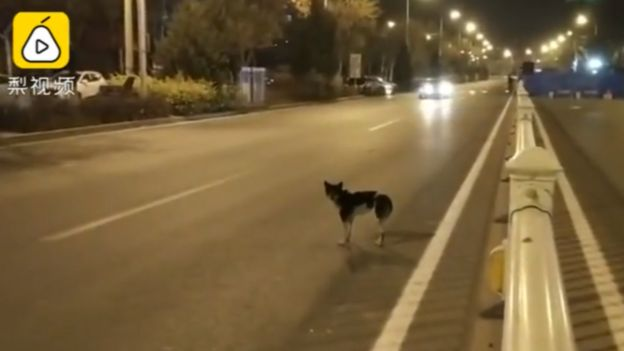 Dog in road