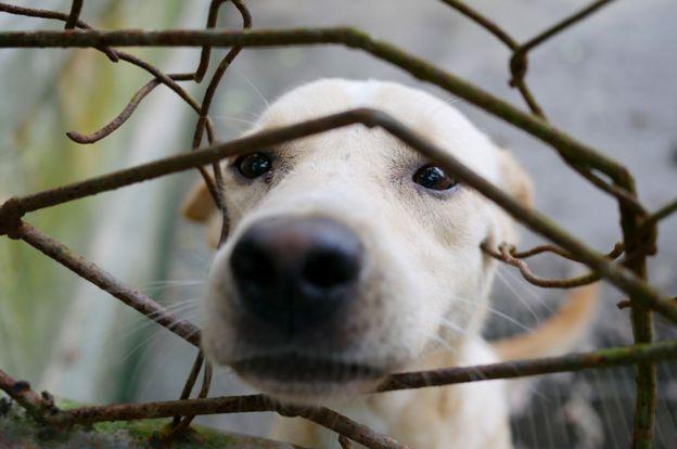 Un perro con su hocico en un alambrado