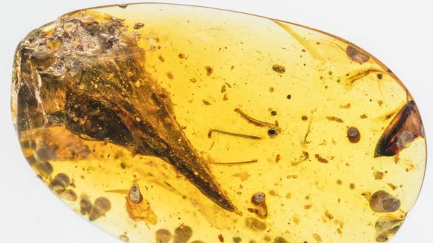 El fósil en ámbar