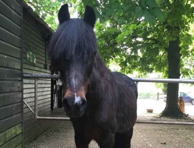 Horse sanctuary faces immediate eviction