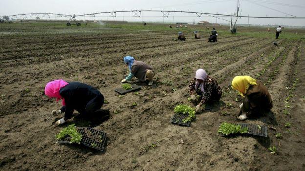 Nhiều nông dân sẽ không thể làm việc trong đợt sóng nhiệt, hoặc thậm chí sẽ chết vì đột quỵ trong vài giờ và sẽ dẫn đến tình trạng khan hiếm thực phẩm.