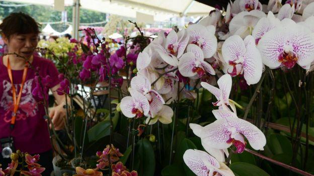Hong Kong cũng có nhiều loại phong lan 'thật'