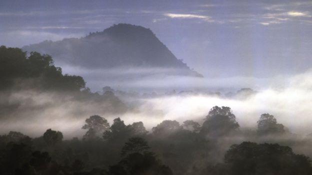 Floresta tropical nublada