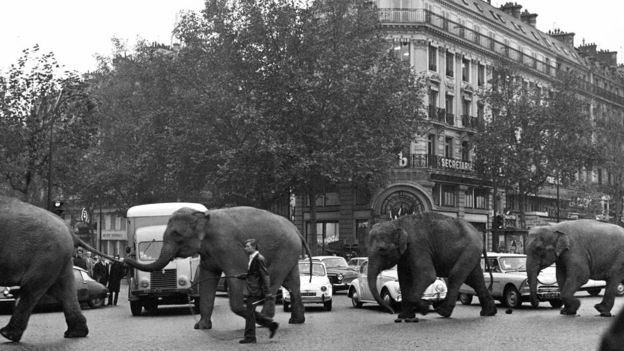 A line of elephants on a Paris street
