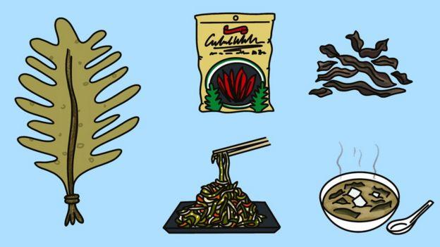 Ilustración de usos de las algas marinas.