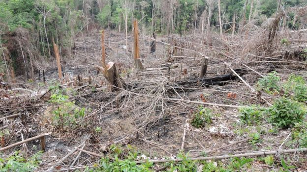 Área desmatada no Pará