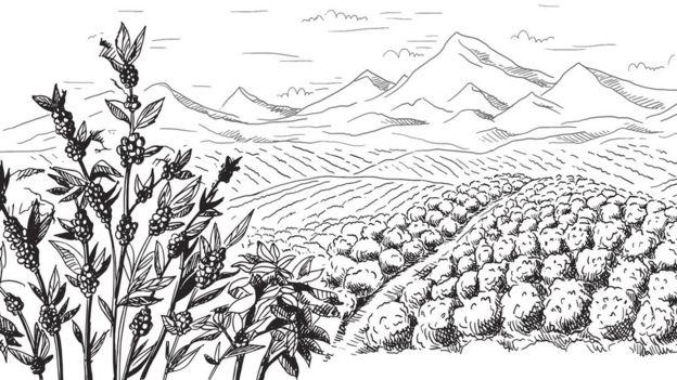 Ilustração mostra plantação de café e montanhas