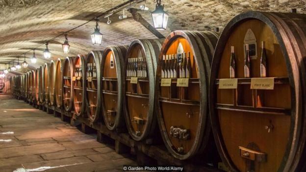Ngày nay, Hầm Rượu Nhà Tế Bần Của Strasbourg sản xuất 140.000 chai rượu vang mỗi năm.