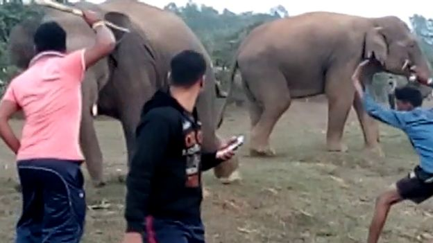 The Indians dying because of wild elephant selfies