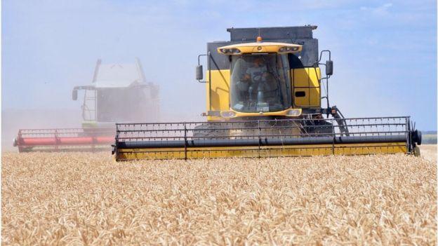 Основа українського аграрного експорту - зерно, а його головні виробники - великі аграрні холдинги