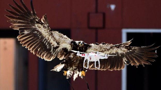 Орел і дрон
