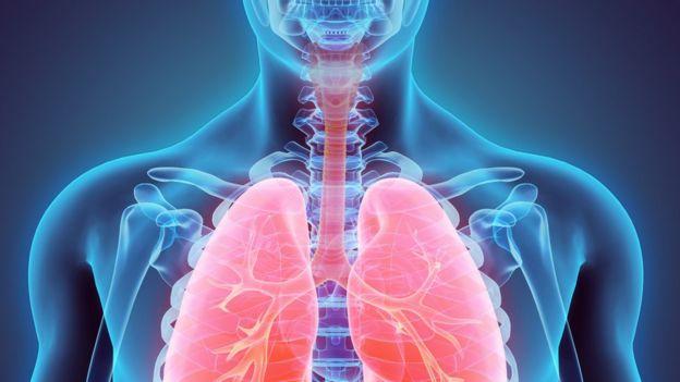 Ilustración de pulmones