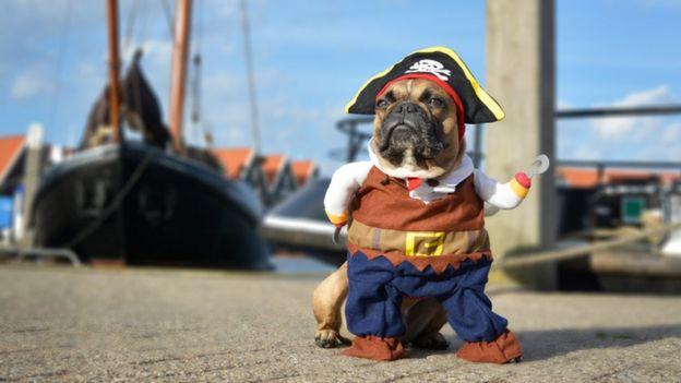 Perro disfrazado de pirata.