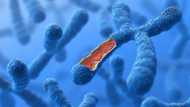 mutação genética