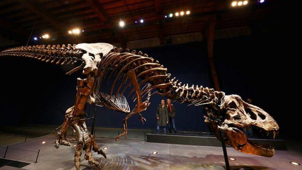 Um fóssil de um tiranossauro rex no Museu de História Natural de Leiden