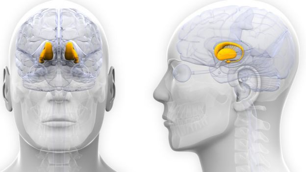 Ilustración con cabeza masculina destacando algunas partes del cerebro.