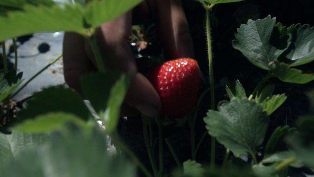 Close up strawberry