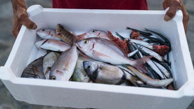 Pessoa segura isopor com peixes dentro