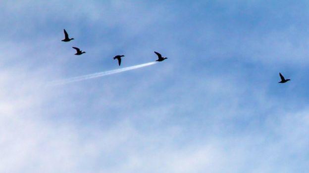 Aves volando. Foto: John Threlfall