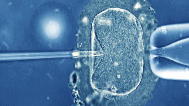 Cena de fertilização in vitro