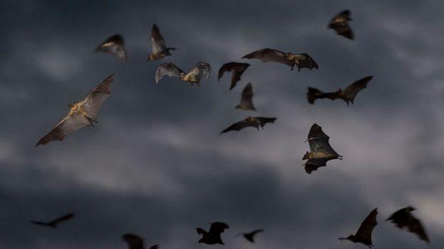 Murciélagos, 2014