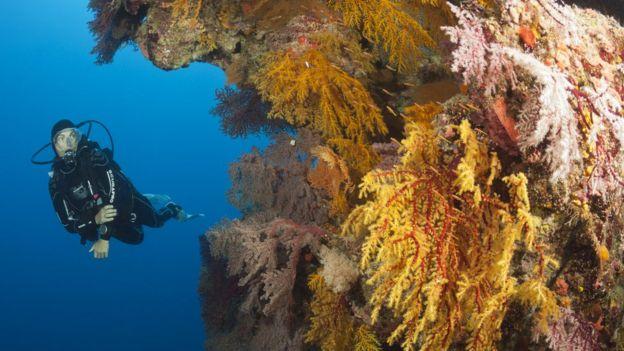 Gran barrera coralina de Australia