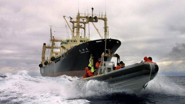 捕鯨母船の前を行くグリーンピースのボート(2001年12月)