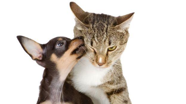 herpes labial se contagia a perros