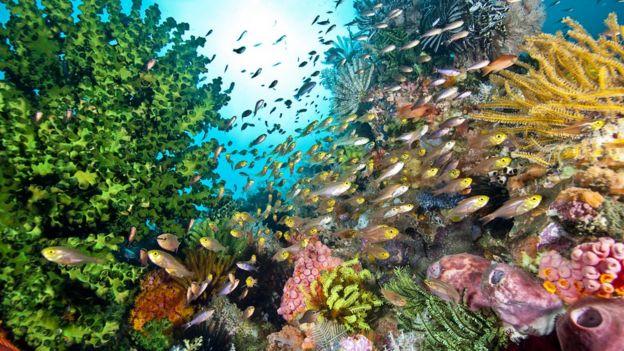 Arrecife.