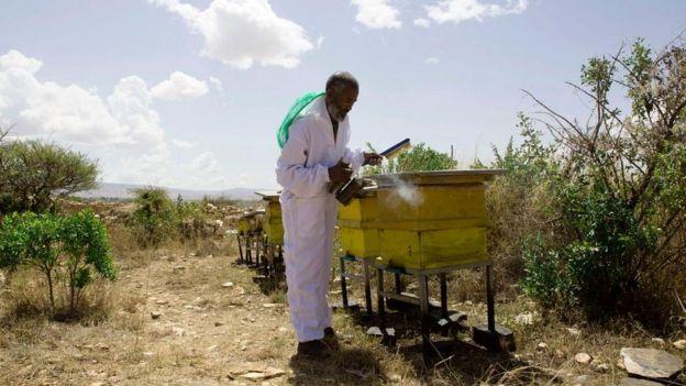 Бджоляр в Ефіопії