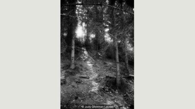 Bosque cerca de Elsinore