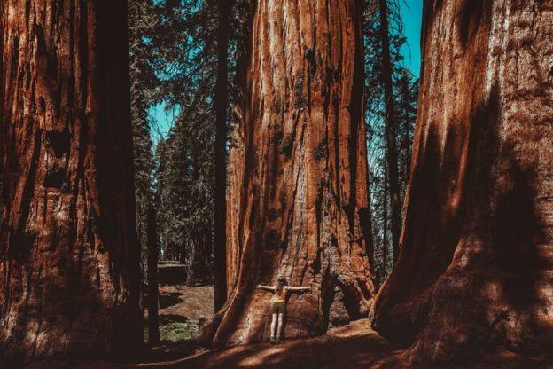 Una mujer abraza el tronco de un enorme secuoya en el Parque Nacional Secuoya, California