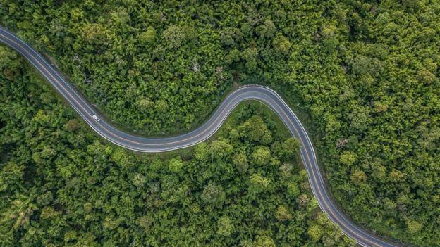 طريق وسط غابة