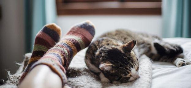 Gato en una cama, dormido a los pies (con coloridos calcetines a rayas) de una persona