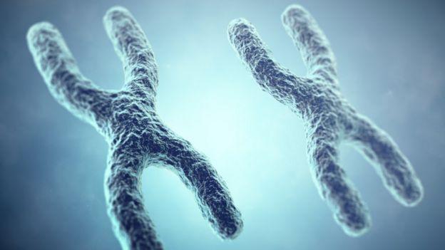 Dos pares de cromosomas X