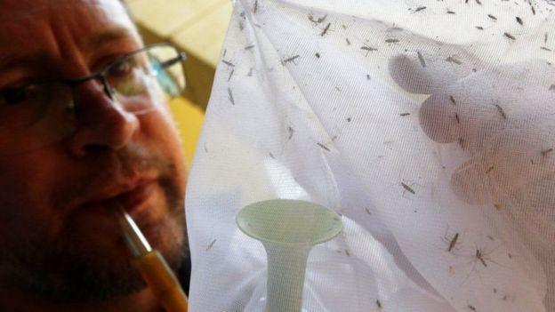 tela com mosquitos