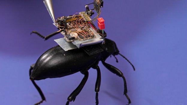 üzerinde kamera bulunan böcek.