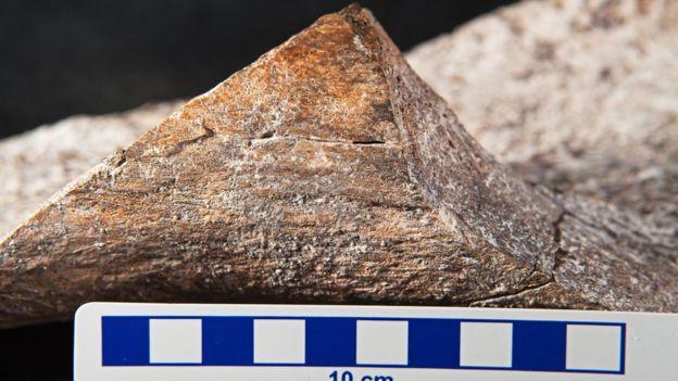 Mastodon bone