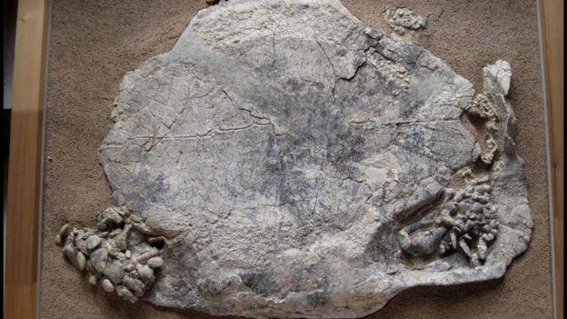 Titanochelon tısbağaları nə vaxtsa kontinental Avropada yaşayıblar.